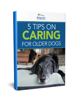 5 Tips on Caring for Older Dogs
