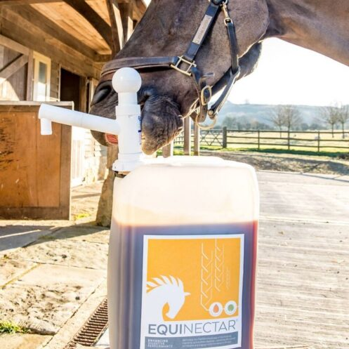 Digestive supplement for racehorses