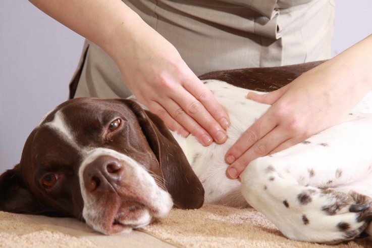 Canine-Massage-IN-3-EASY-STEPS_3