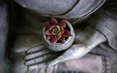 Five-week Buddhist Meditation Course