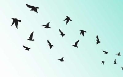 Self Inquiry & Awareness Meditation Course