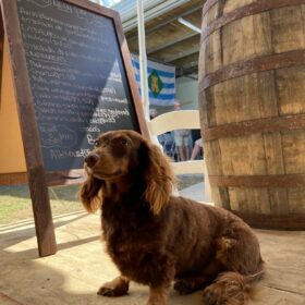 Chupi the Rum Dog