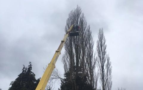 cherrypicker_tree_surgery_crowning