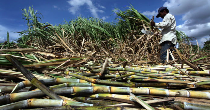 Government blocks sugarcane exportation to Kenya