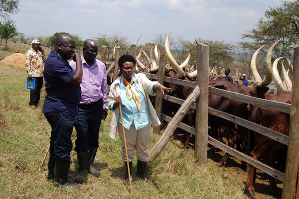 Government indigenous animal gen bank in Entebbe