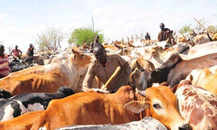 Karamojong Turkana and Toposa raid their cattle
