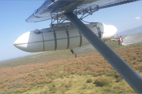 Uganda starts spraying of desert locusts
