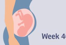 pregnancy week by Week 37 to 40