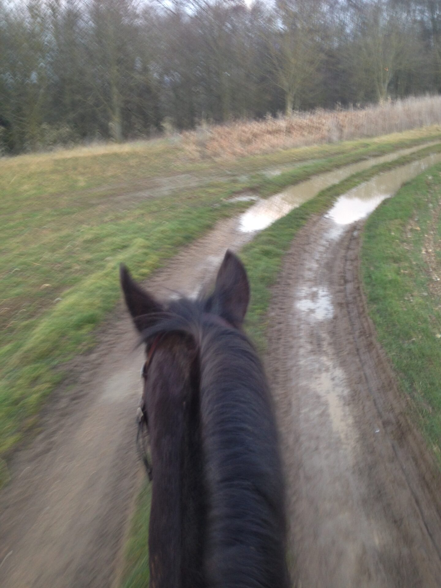 An early spring hack and a slice of sanity