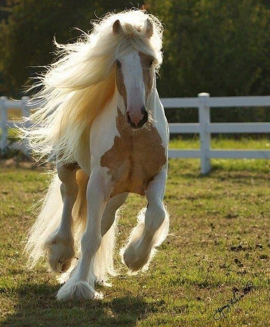 Blonde bombshell horse