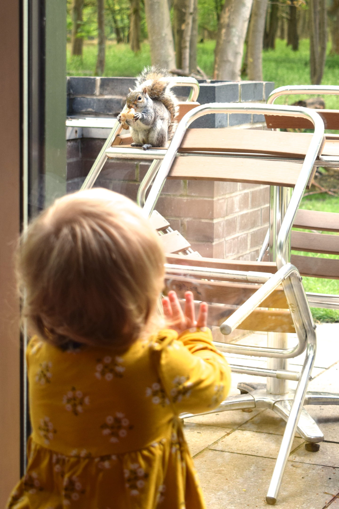 toddler looking out of the window at Center Parcs Elveden Forest