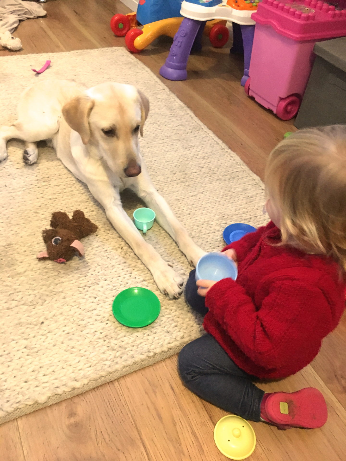 22 months old girl playing tea parties with a yellow labrador