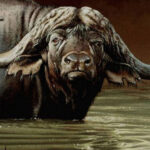 "FC5 Buffalo Wallow"" Buffalo in water Oil on canvas 25cm x 30cm"