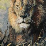 S2910 Lion Oil on Board 18cm x 24cm