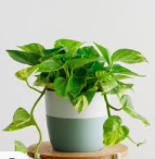 PERFECT PLANTS TO CREATE AN INDOOR URBAN JUNGLE
