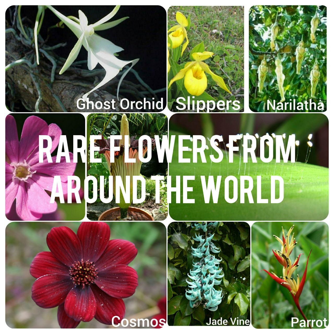 13 Rare Flowers That You Probably Haven't Seen