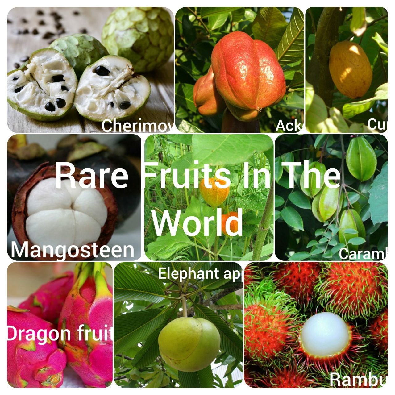 13 Unusual Rare Fruits to Try Around The World