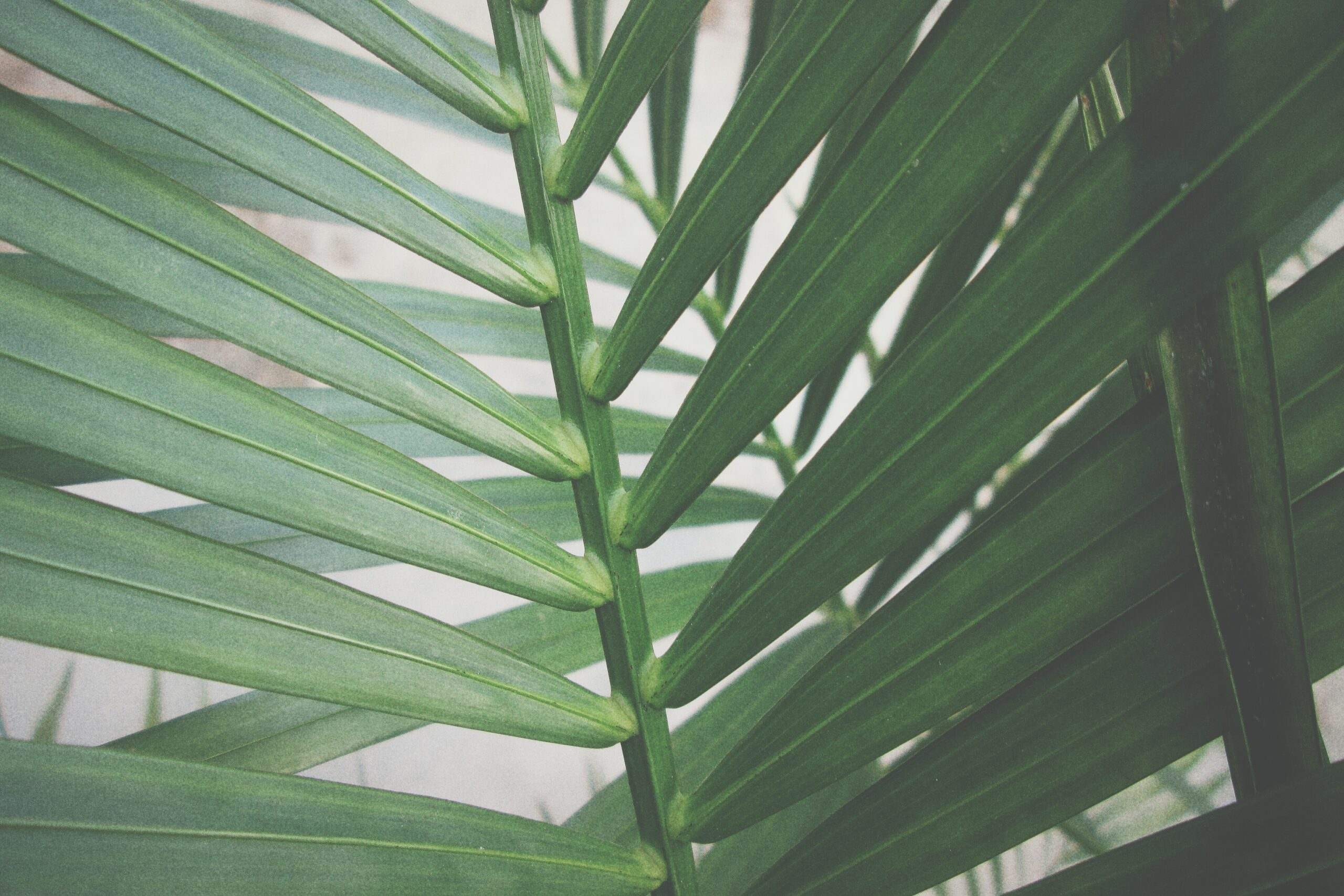 Palm leaves - Rachel Writes services page