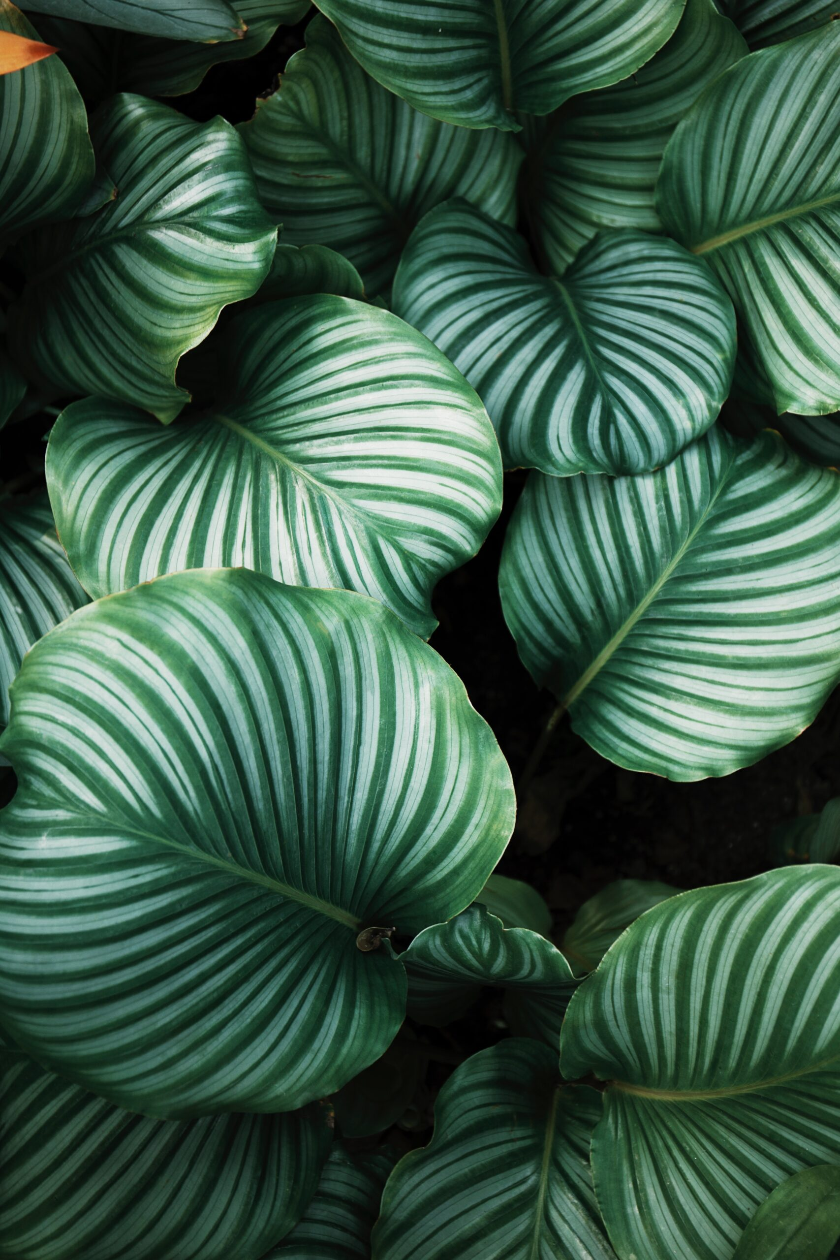 Green plant leaves - Rachel Writes freelance content writer and copywriter