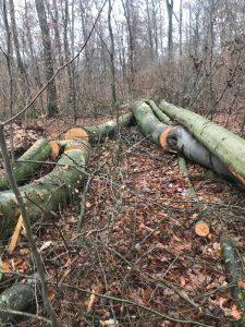 Abholzung Vilbeler Wald Herbst 2020
