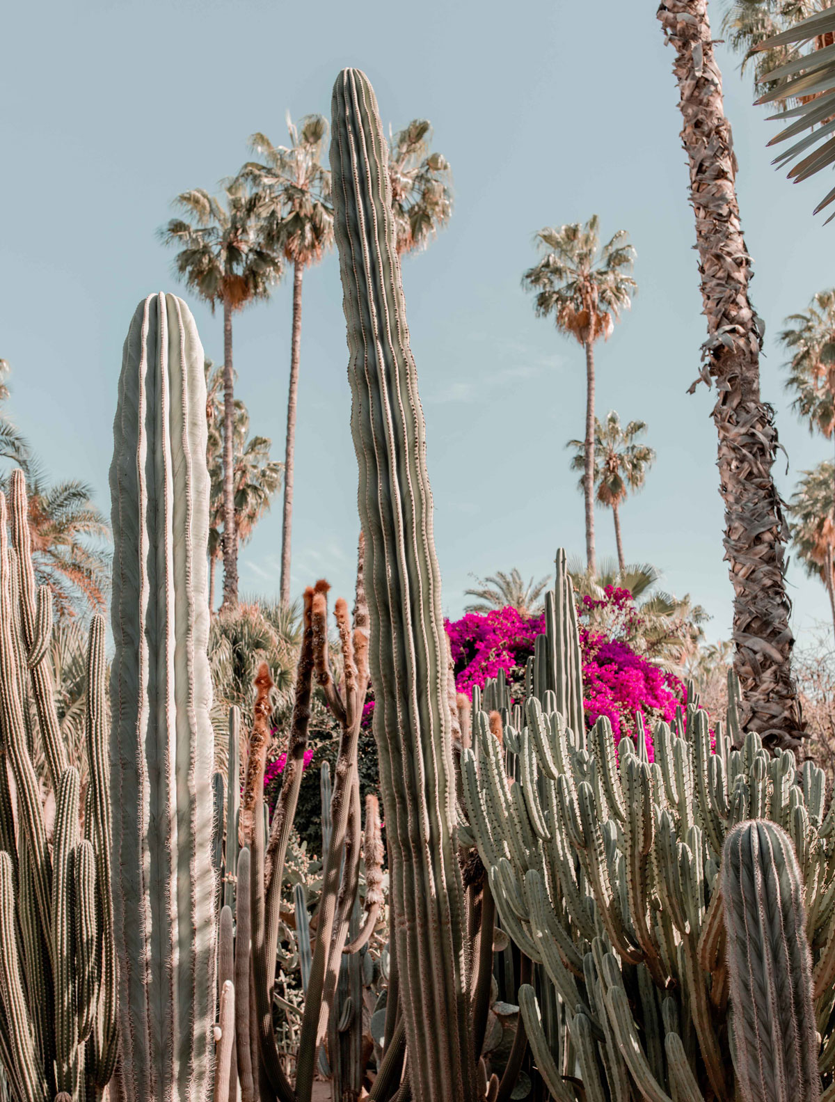 2-Top-things-to-do-in-marrakech-Bucket-list-kelseyinlondon-Kelsey-Heinrichs--What-to-do-in-marrakech--Where-to-go-in-marrakech-top-places-in-marrakech-le-jardin-majorelle
