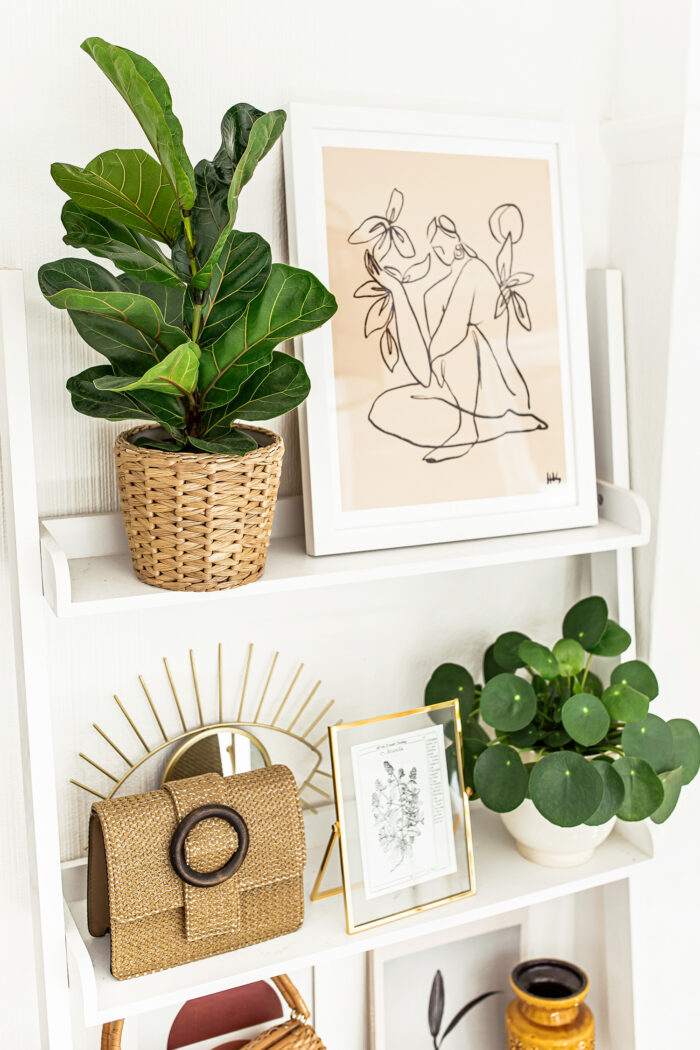 Plant Guide: the best indoor plants for your home