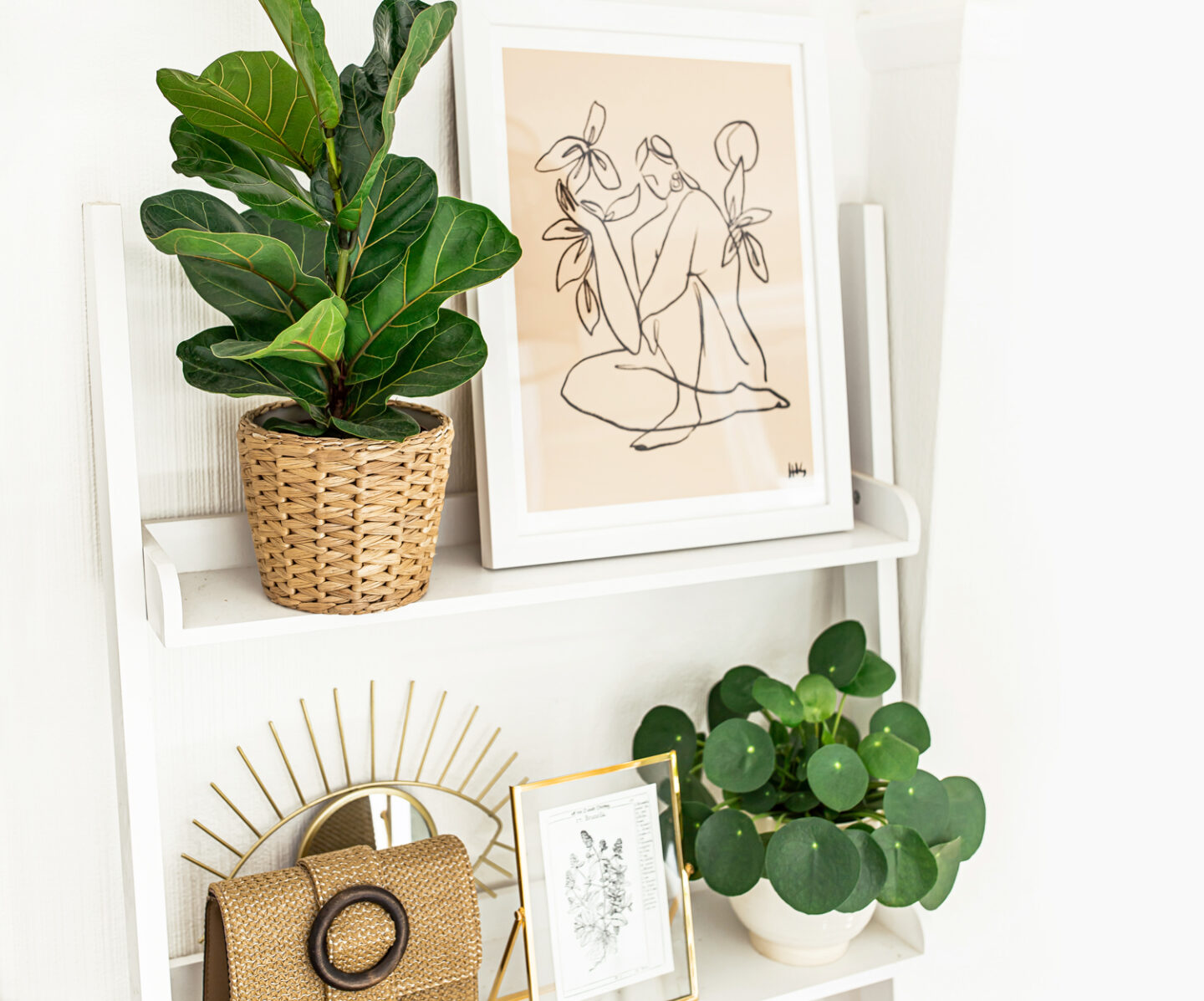 2-kelseyinlondon-homewithkelsey-plant-guide-best-indoor-plants