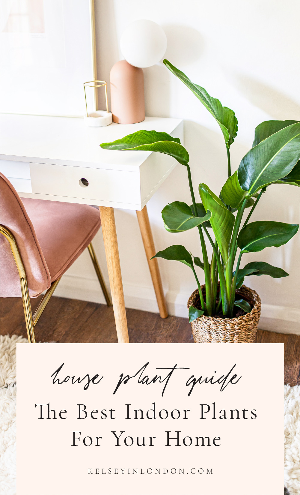House Plant Guide – The Best Indoor Plants For Your Home – @kelseyinlondon – Kelsey Heinrichs – homewithkelsey