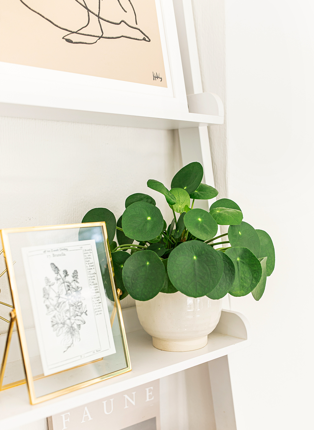 chinese-money-plant-Pilea-Peperomioides-Pancake-plant-kelseyinlondon-homewithkelsey-plant-guide-best-indoor-plants