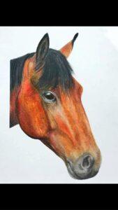 Grace Horwood - horse
