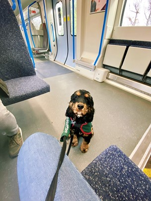 Archibald The Assistance Dog