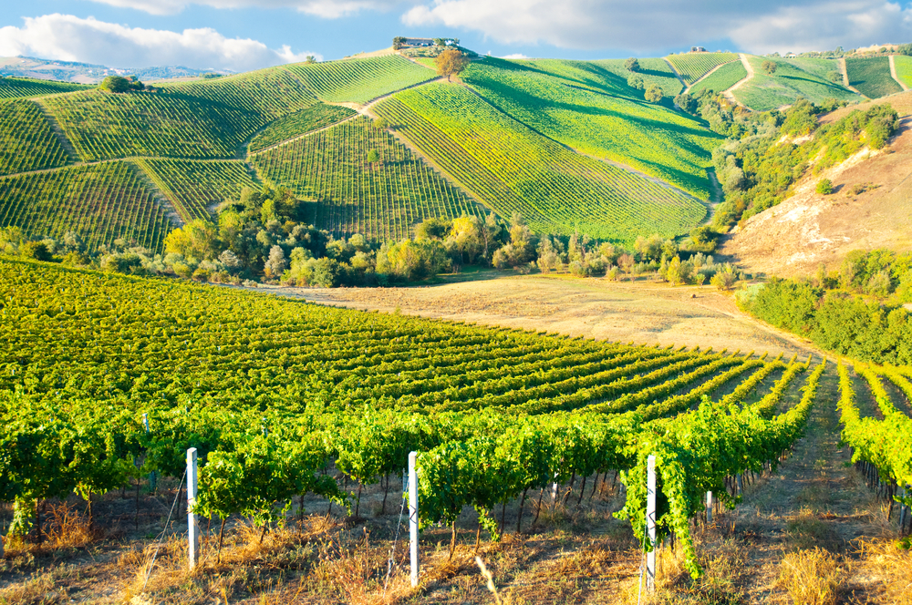 Discover Bordeaux