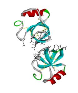 Molecular dynamics simulation of the dimerization of Hydrophobin HFBII