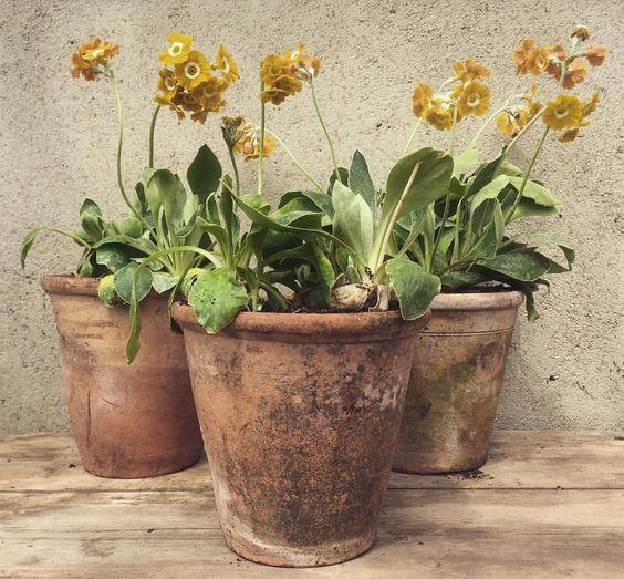 Terracotta Pots - @tradchap - Directorio Deco by Gloria Gonzalez