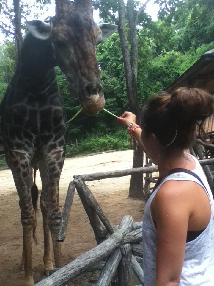 Wanderlustbee Chiang Mai, Thailand. Chiang Mai Zoo feeding giraffe