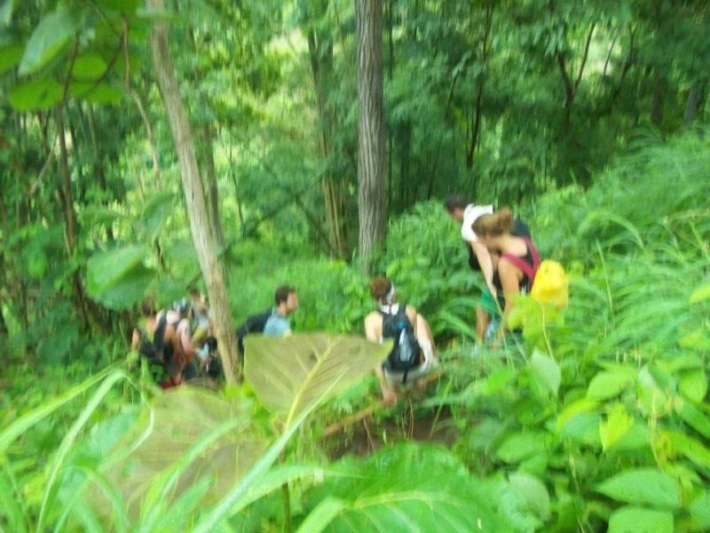 Wanderlsust bee jungle trekking in chiang mai