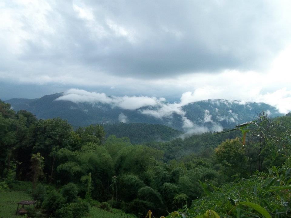 wanderlust bee Chiang mai