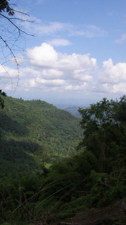 wanderlust bee jungle trekking in chiang mai