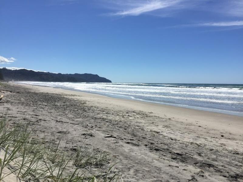 Waihi Beach wandelust bee