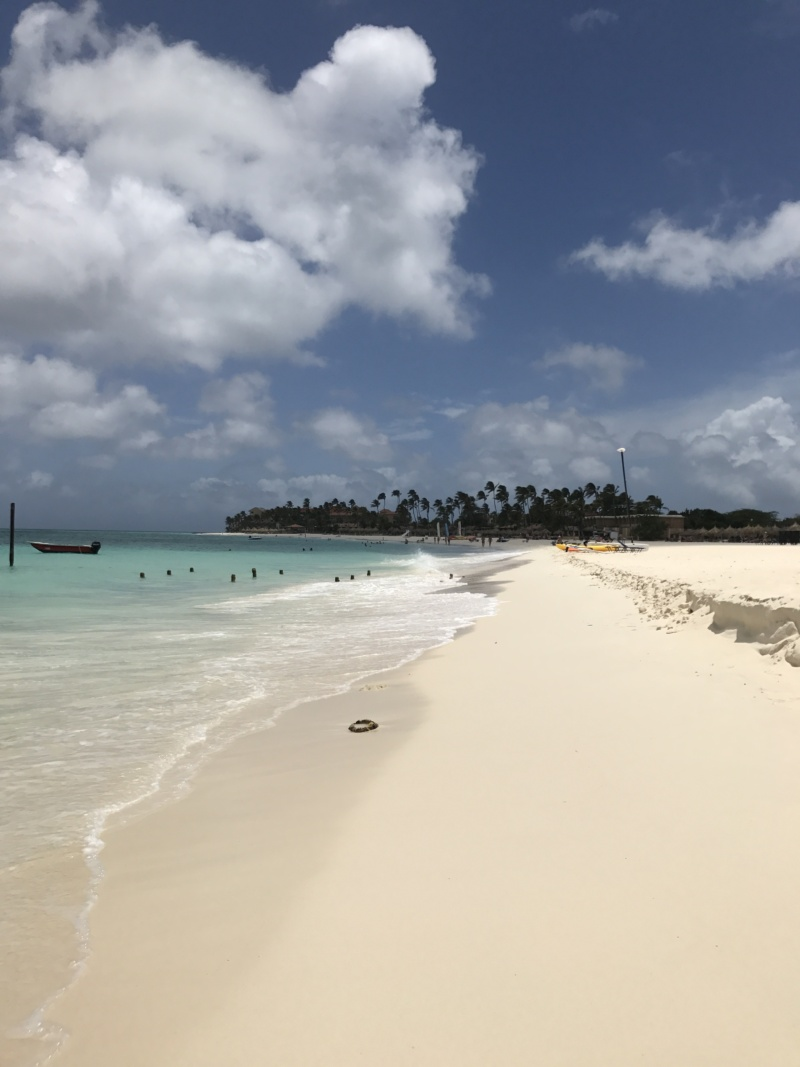 Wanderlustbee Druif beach, Aruba, Caribbean