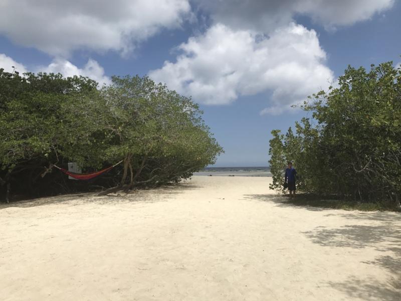 Wanderlustbee- Mangel Halto, Aruba, Caribbean