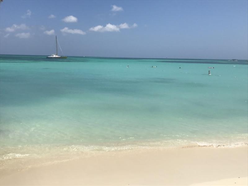 wanderlust bee - Aruba