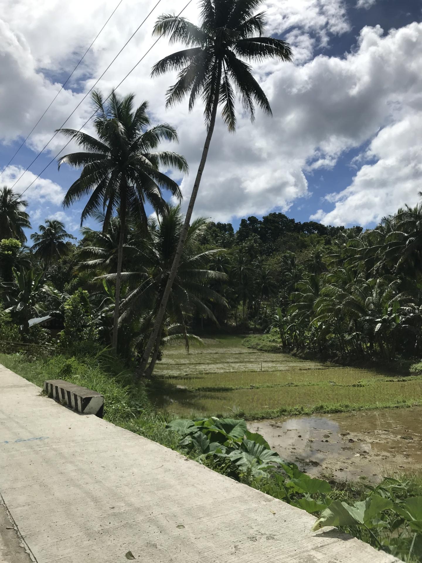 Wanderlust bee- Bohol, Philippines