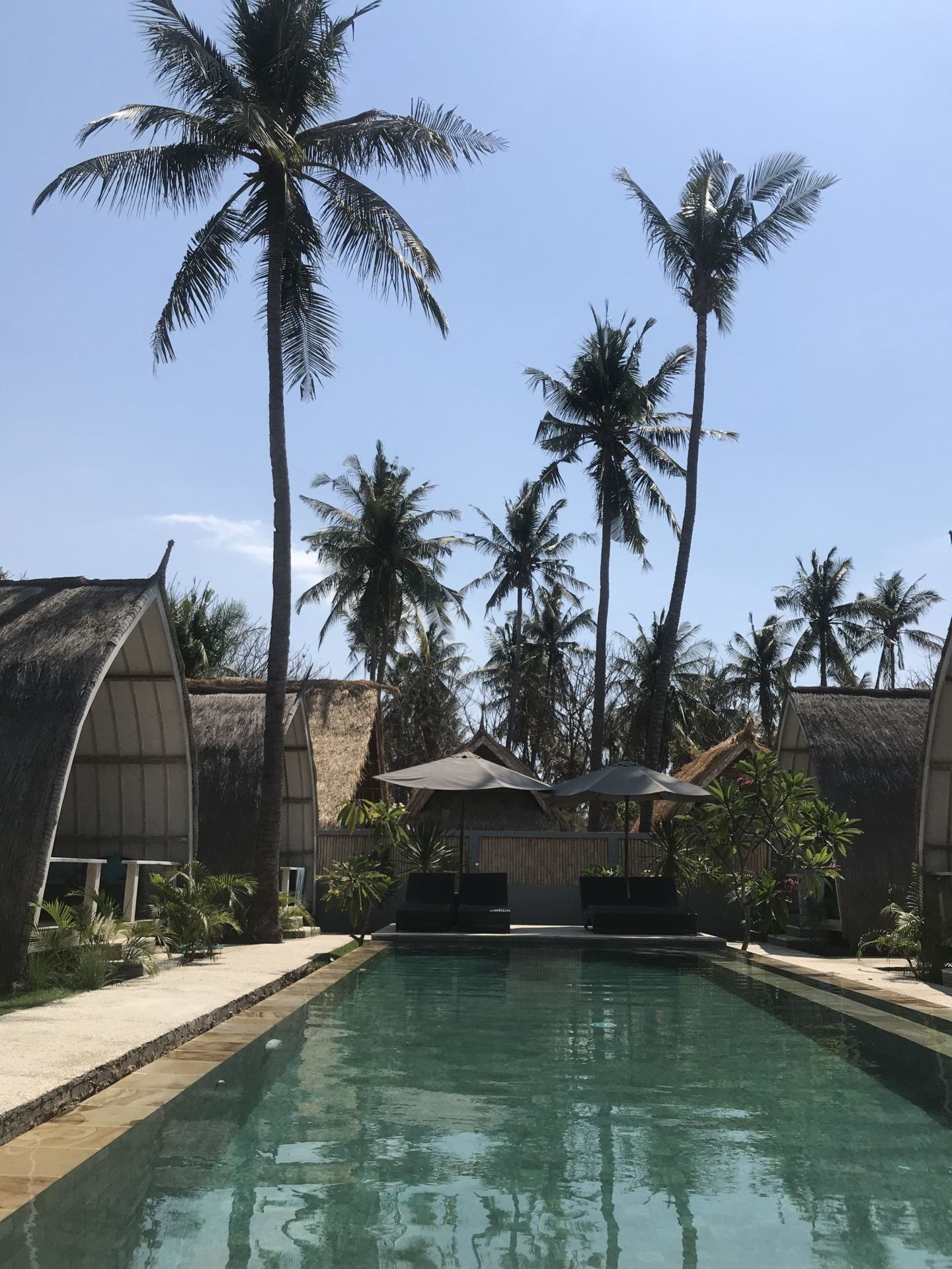 Wanderlust bee - Gili Meno, Bali