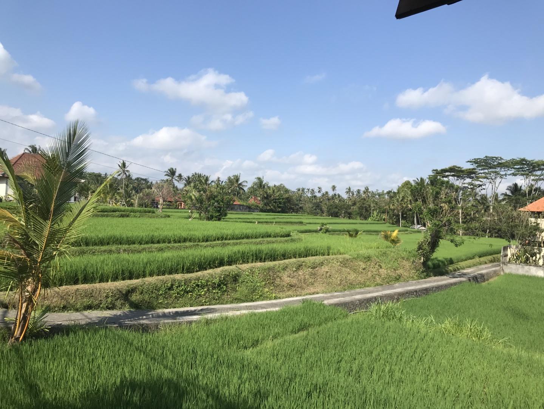 Wanderlustbee - Ubud, Bali