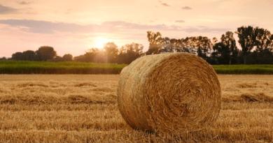 ÖNCELİK TARIMA /// Priority to Agriculture