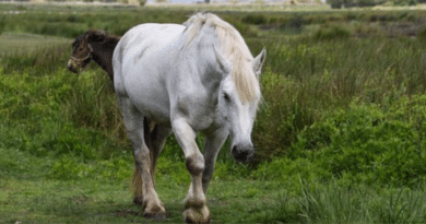 AT VE HÜKÜMDAR /// Horse and King