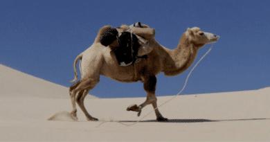 DEVE 1 $, DEVE 1000 $. /// Camel 1 $, Camel 1000 $.