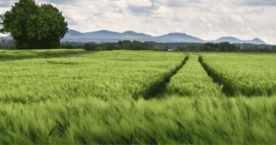 ÜCRETSİZ TARIM ARAZİSİ /// Free Farm Land