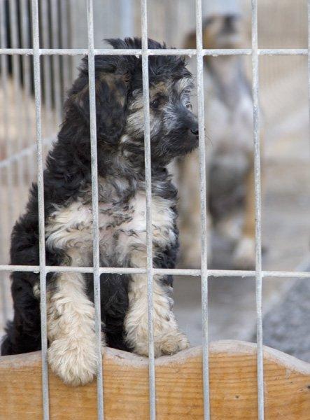 puppy in kennel